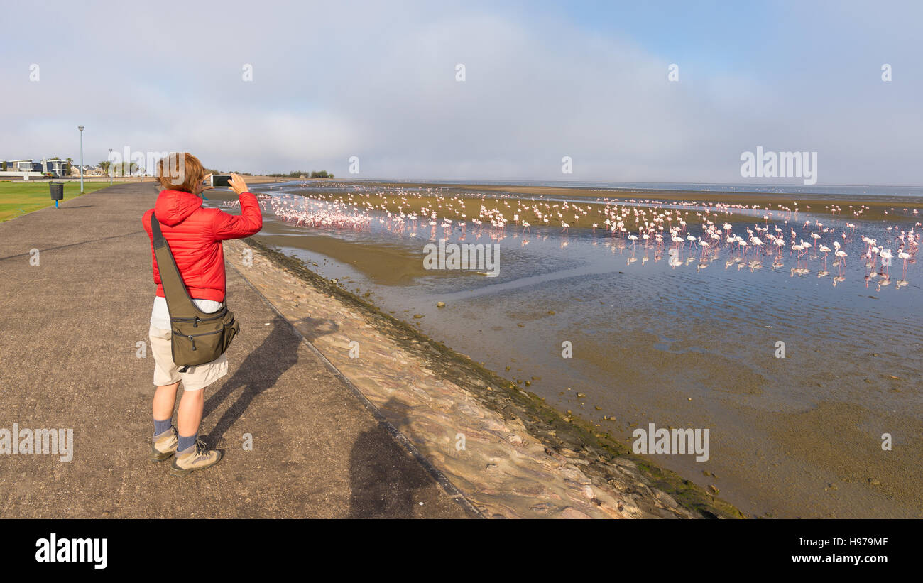 Tourist photographing flamingos at Walvis Bay, on the atlantic coastline of Namibia, Africa. Wide angle rear view. - Stock Image