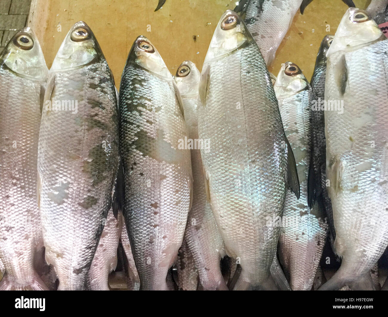 Milk Mish or local called Ikan Bolu or Bahulu on display at fish market. - Stock Image