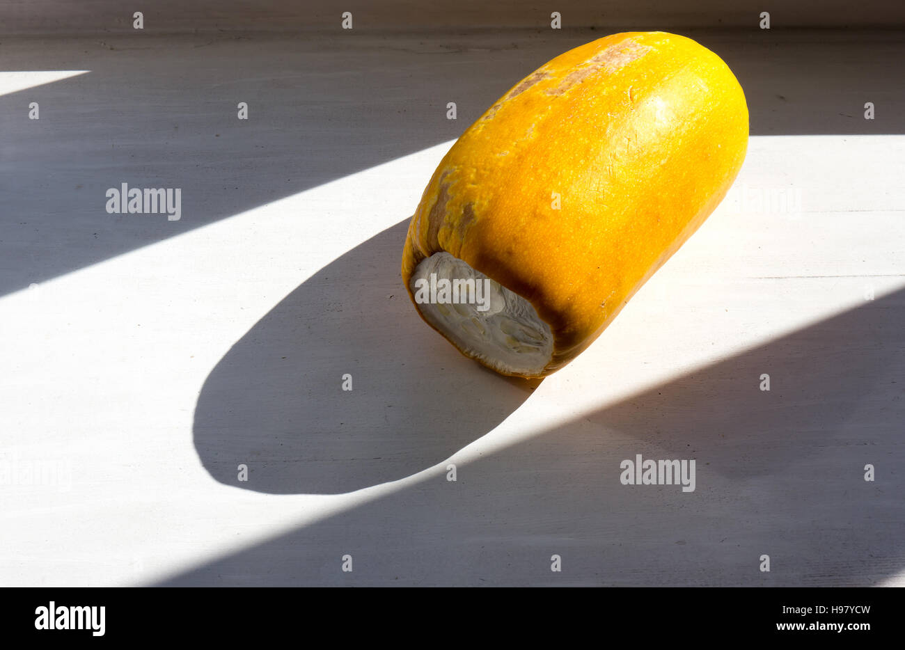 The nature raw squash object. - Stock Image