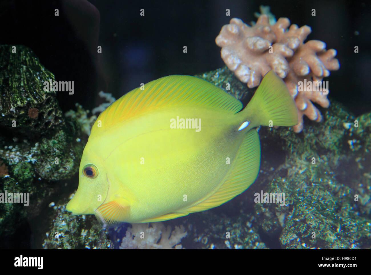 Japan Tokyo Aquarium Fish Stock Photo 126180461 Alamy