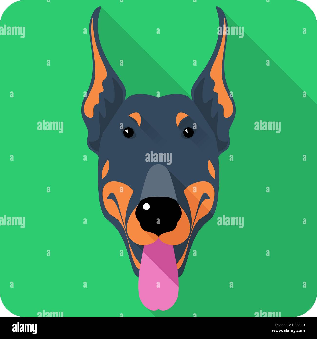 Vector dog Doberman Pinscher icon flat design - Stock Image