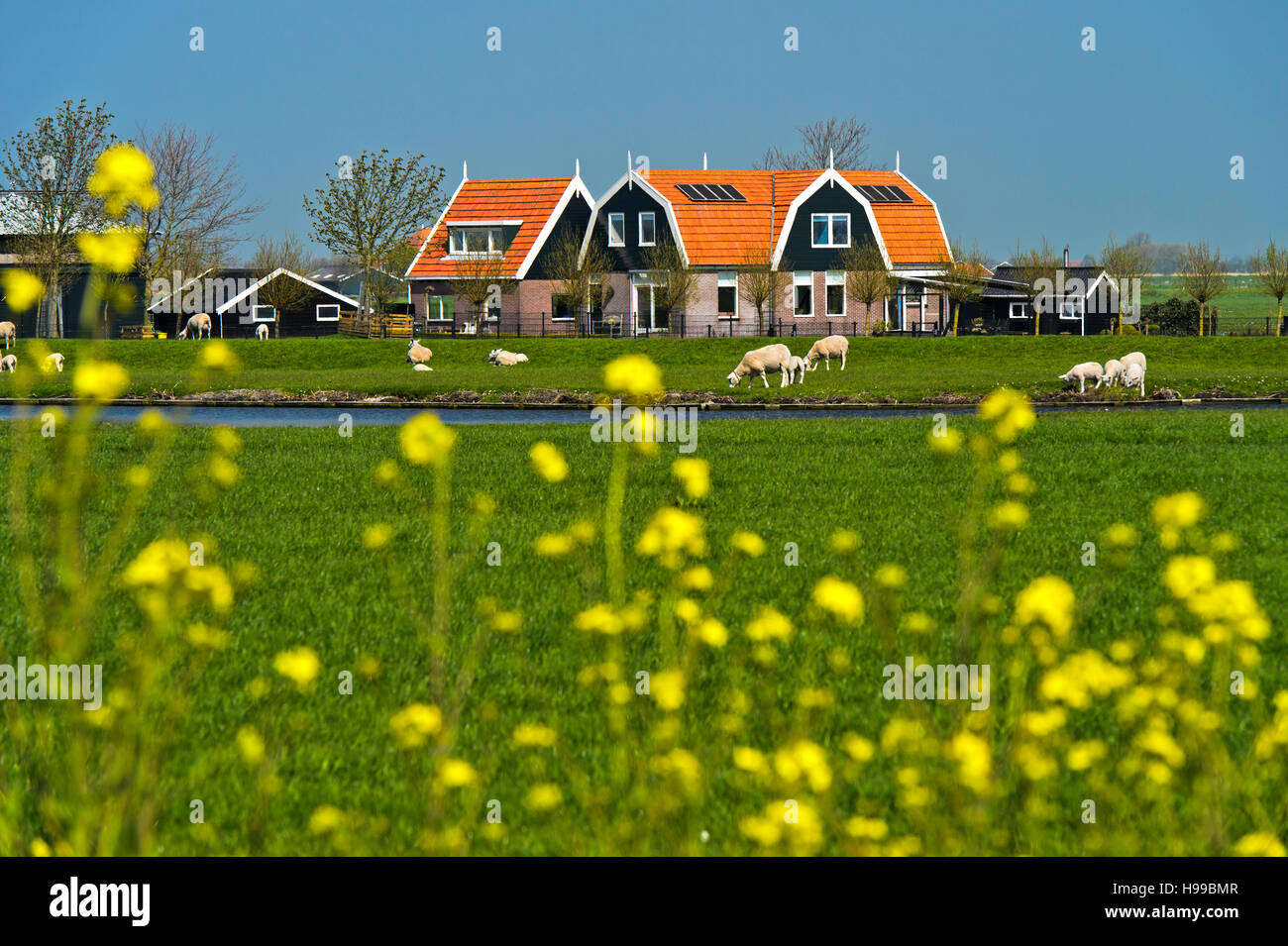 Farm house in the marshland, Beemster, Waterland Region, North Holland, Netherlands - Stock Image