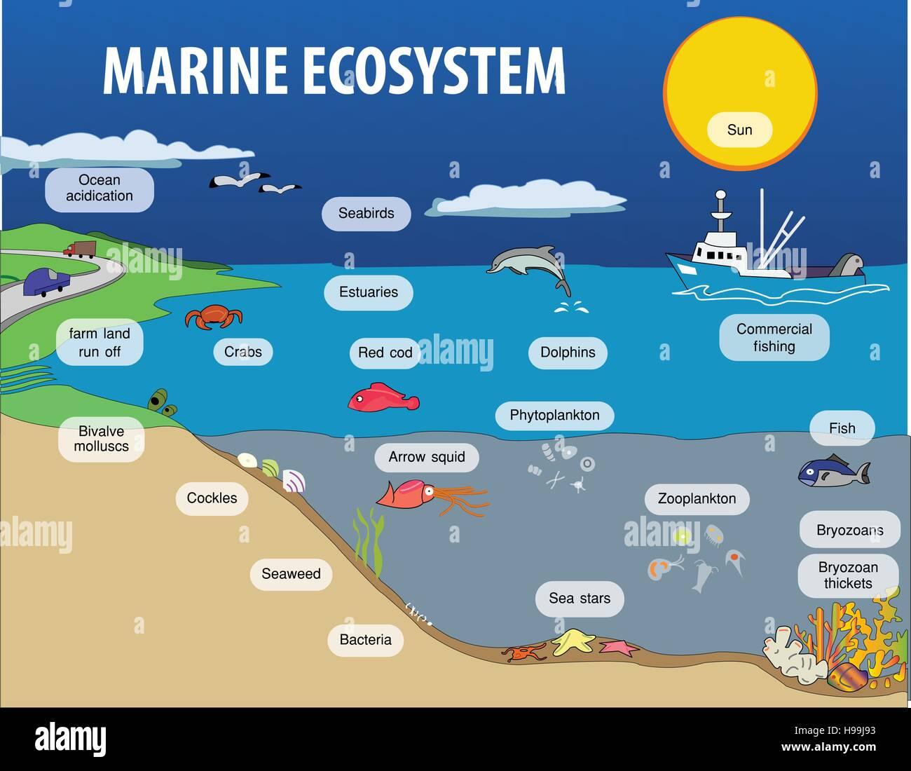 Marine Biome Food Chain
