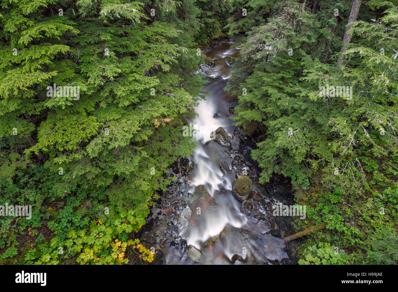 A river of the temperate coastal rain forest, Tongass National Forest, Alaska, USA - Stock Image