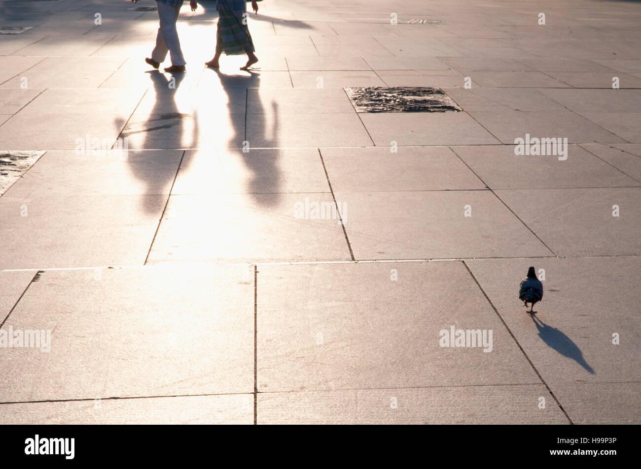 Shadows on pavement. Felipe II Avenue, Madrid, Spain. Stock Photo
