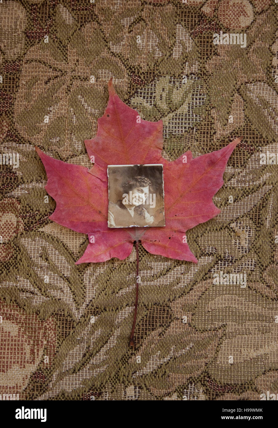 Antique photo of a woman, placed on a red Fall leaf. - Stock Image