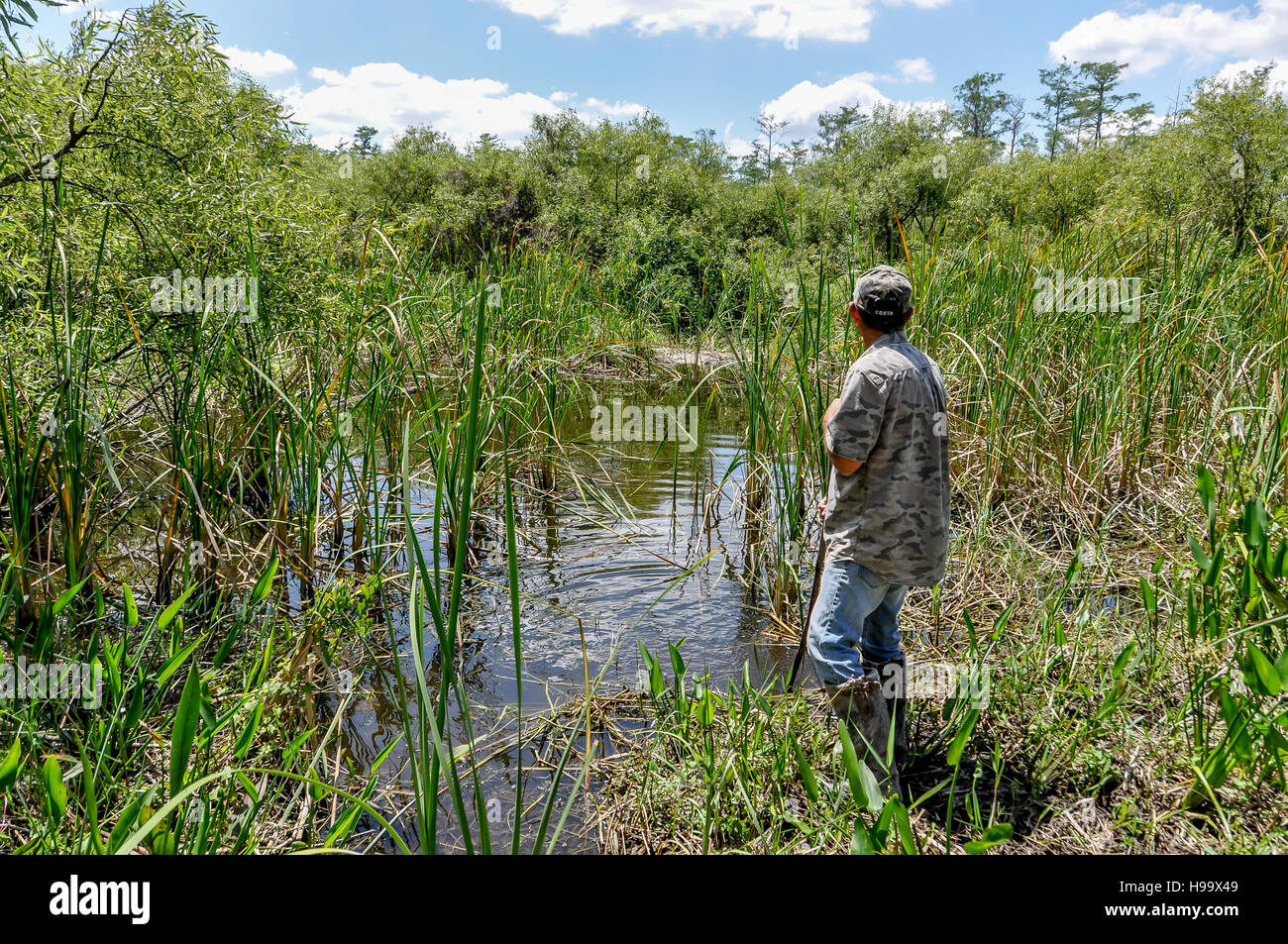A Big Cypress swamp buggy tour guide looks over a pond / gater hole in the national preserve in search of an American - Stock Image