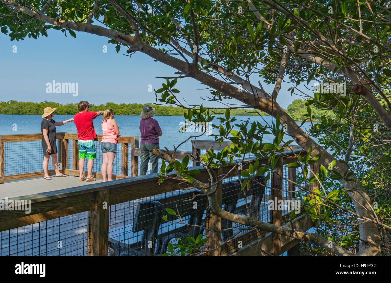 Florida, Sanibel Island, J.N. 'Ding' Darling National Wildlife Refuge, Wildlife Drive, Mangrove Overlook - Stock Image