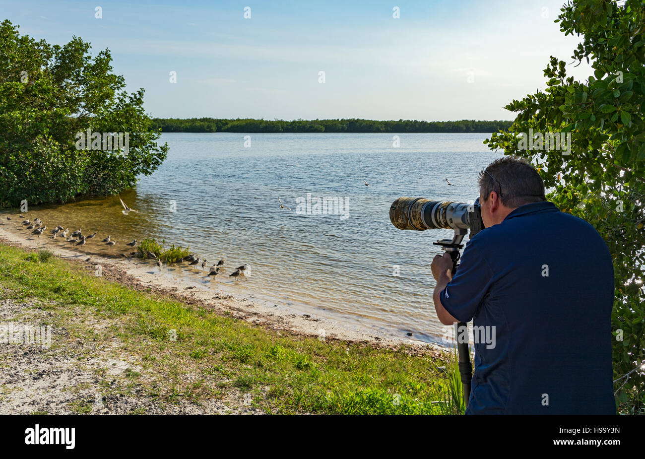 Florida, Sanibel Island, J.N. 'Ding' Darling National Wildlife Refuge, Wildlife Drive, photographer photographing - Stock Image