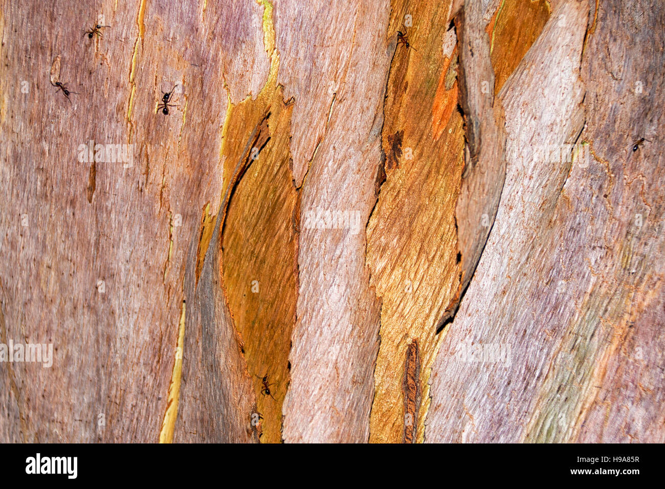 Close up of tree bark -  forest tree, - Stock Image