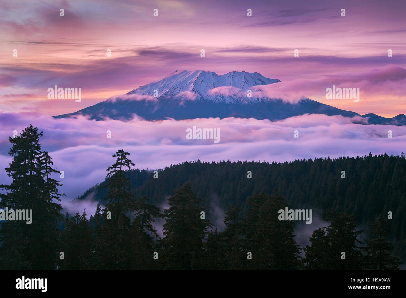 View of Mount St Helens sunset from McClellan Viewpoint in Gifford Pinchot National Forest Washington - Stock Image