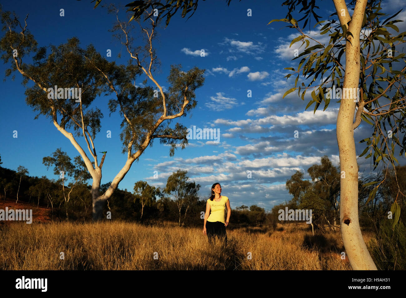 A woman is surrounded by gum trees in Alice Springs, the MacDonnell Ranges, Northern Territory, Central Australia - Stock Image