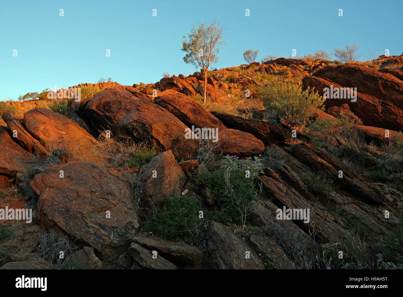 Rocks and flowers on the hillside of the Olive Pink Botanic Garden, Alice Springs, Northern Territory, Australia - Stock Image