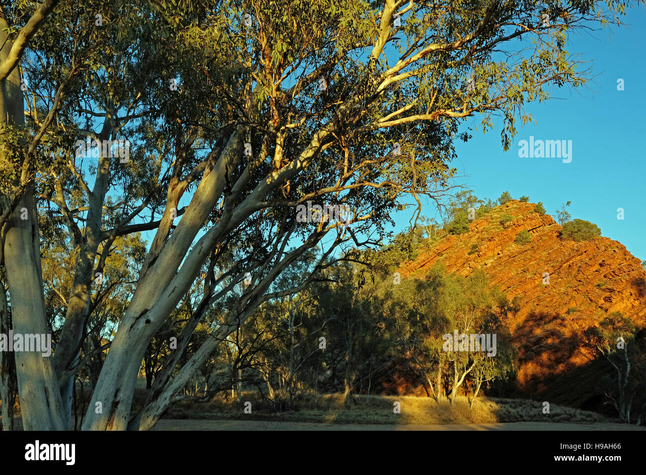 Gum trees and rocks at Honeymoon Gap, on the Roe Creek in the Macdonnell Ranges, Northern Territory, Australia - Stock Image