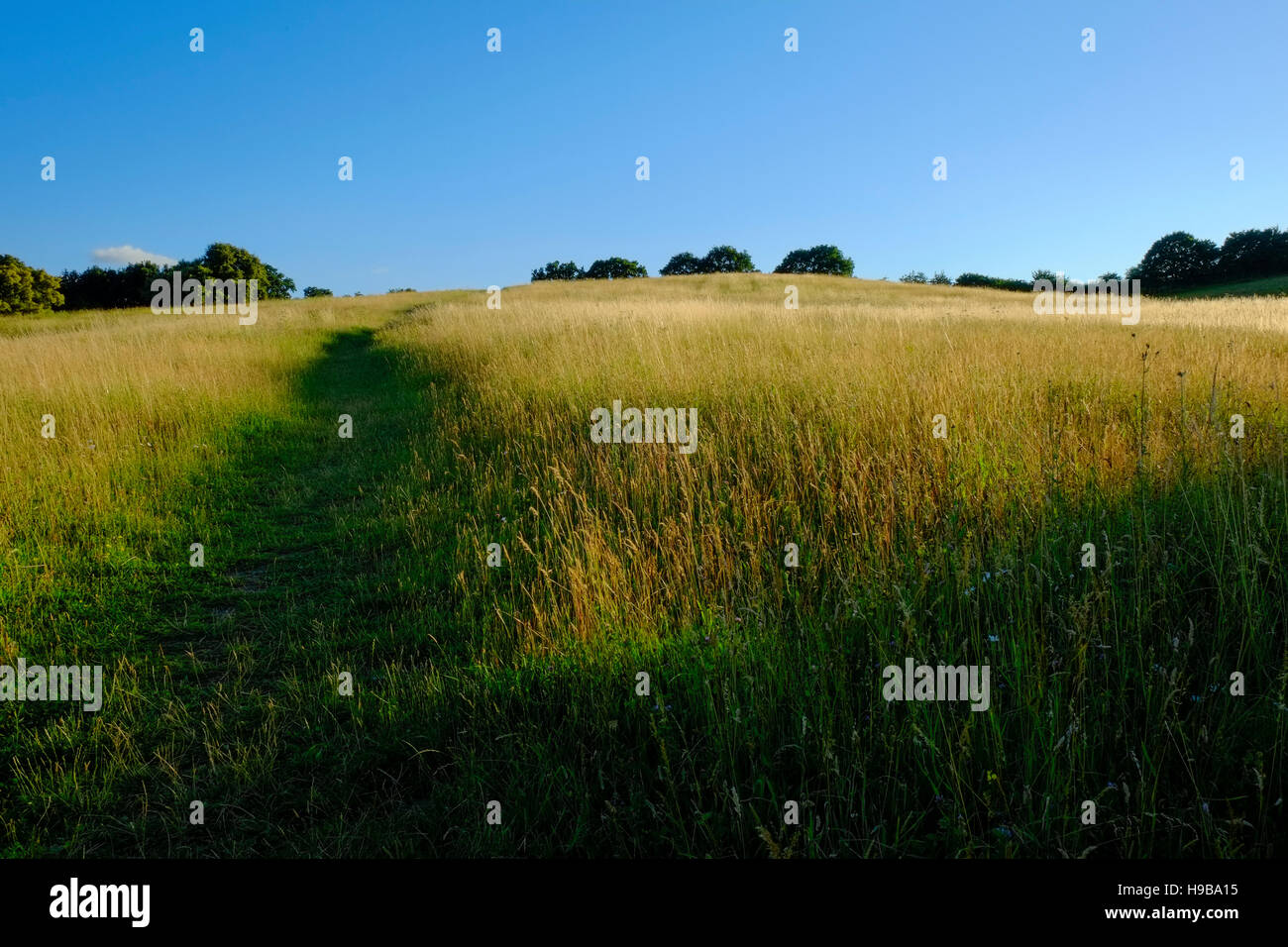 A British meadow at sunset - Stock Image