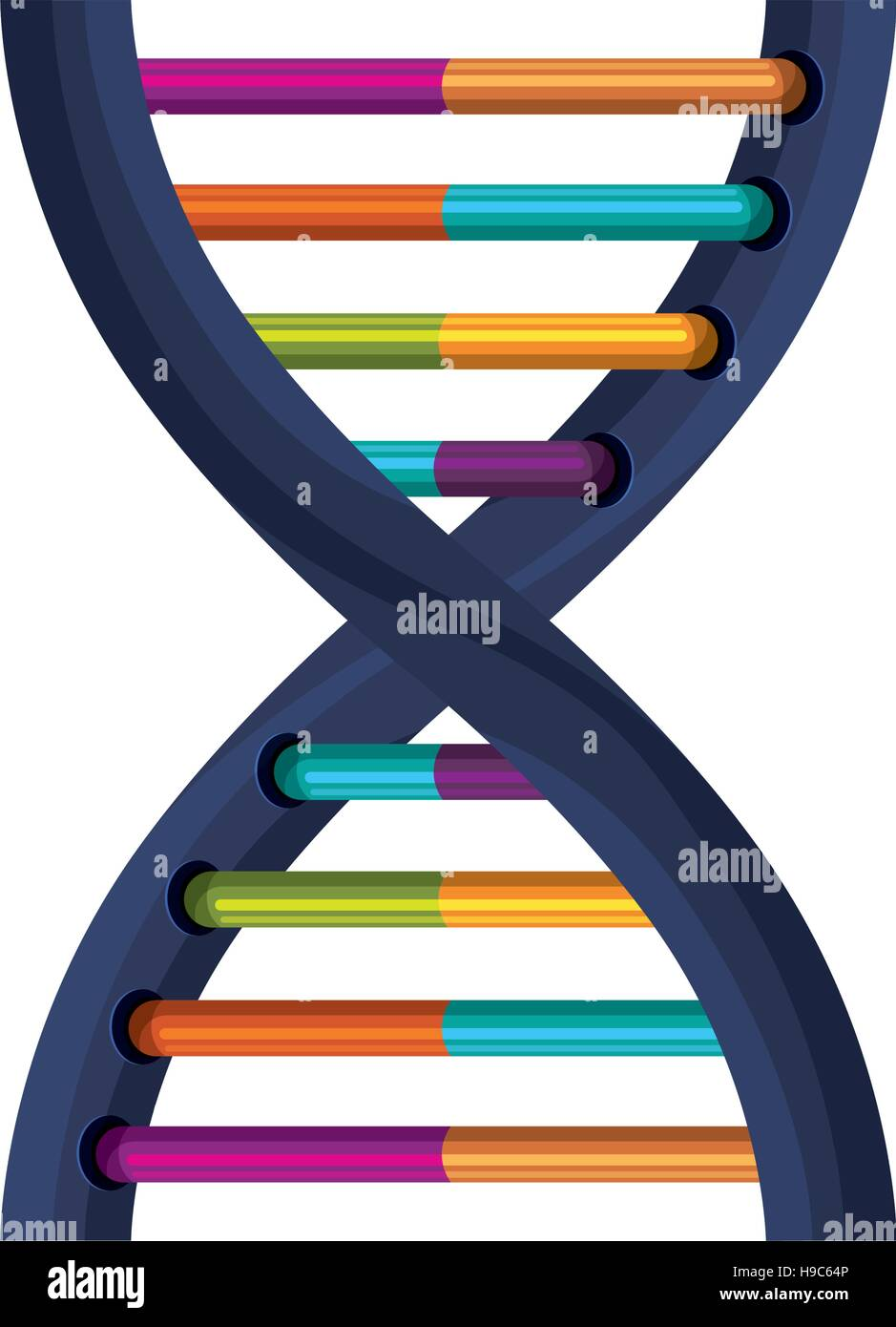 deoxyribonucleic acid with bases in color - Stock Image