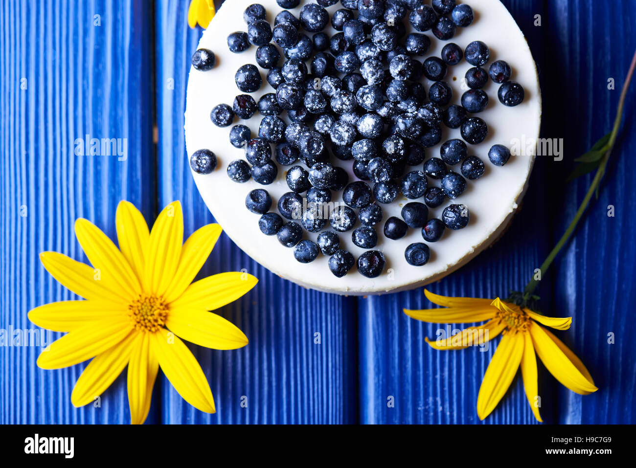 Sweet creamy blueberry cheesecake with fresh blue berries on a blue wooden background with yellow flowers. top view. - Stock Image