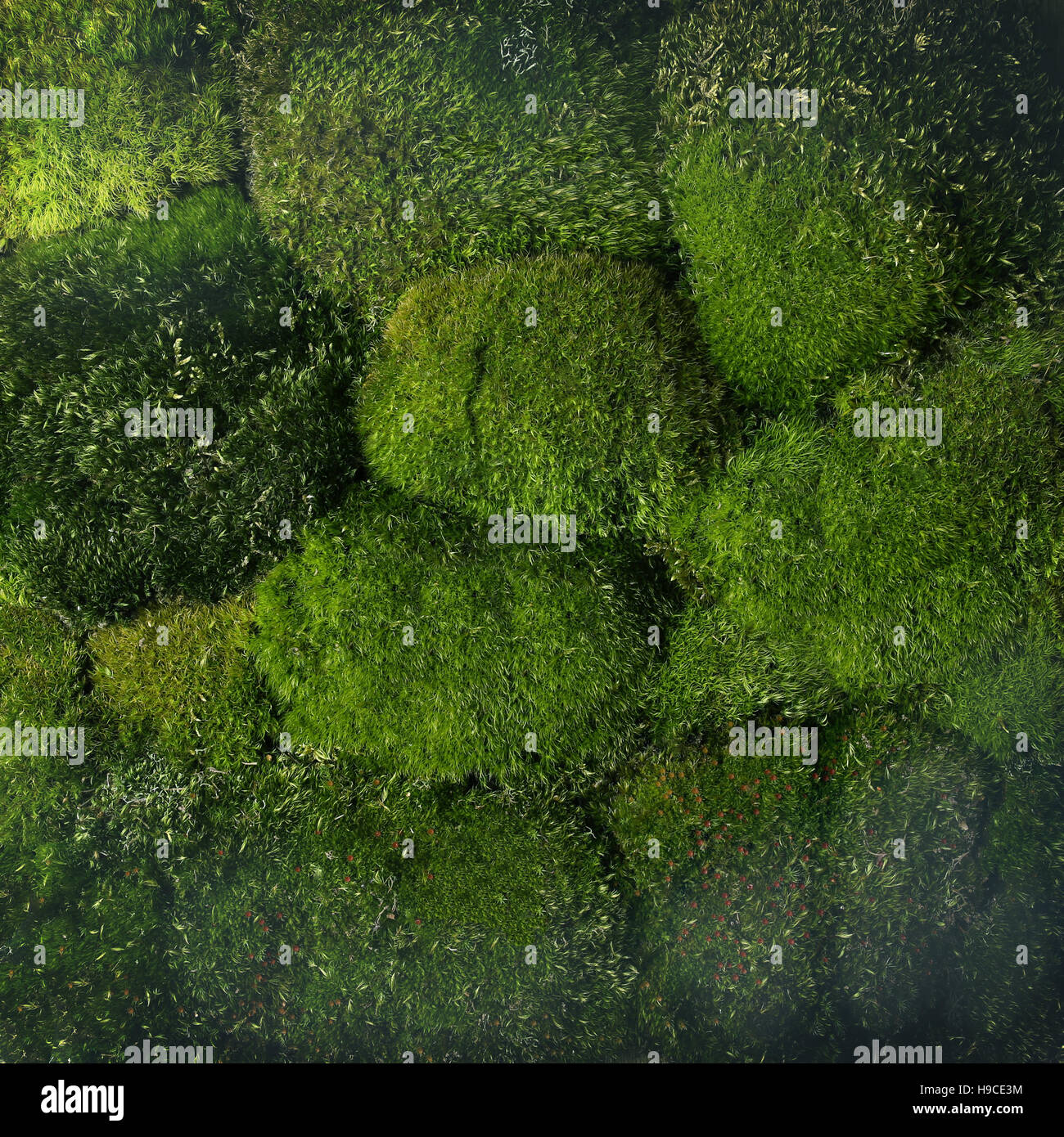 Green Moss Background. Forest Pattern -view From Above