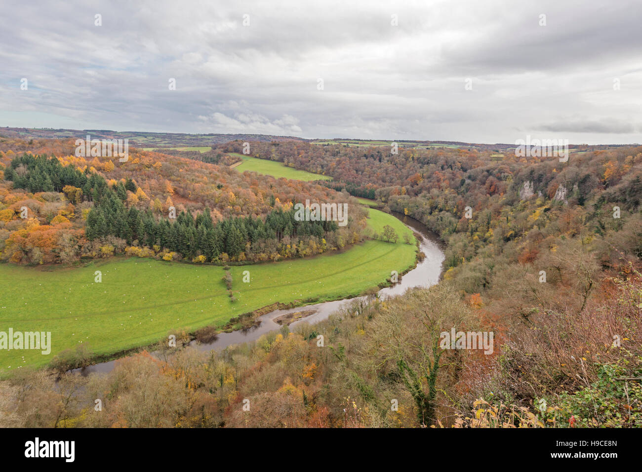 Autumn over the River Wye from Symonds Yat Rock, Gloucestershire, England, UK - Stock Image