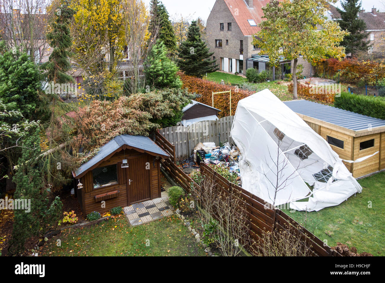 Broken tent and pine tree snapped in two and fallen on roof of garden house during autumn storm raging over Belgium Stock Photo