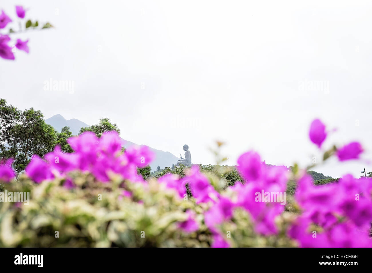 Big Buddha on Lantau Island viewed through purple bougainvilleas, Hong Kong - Stock Image