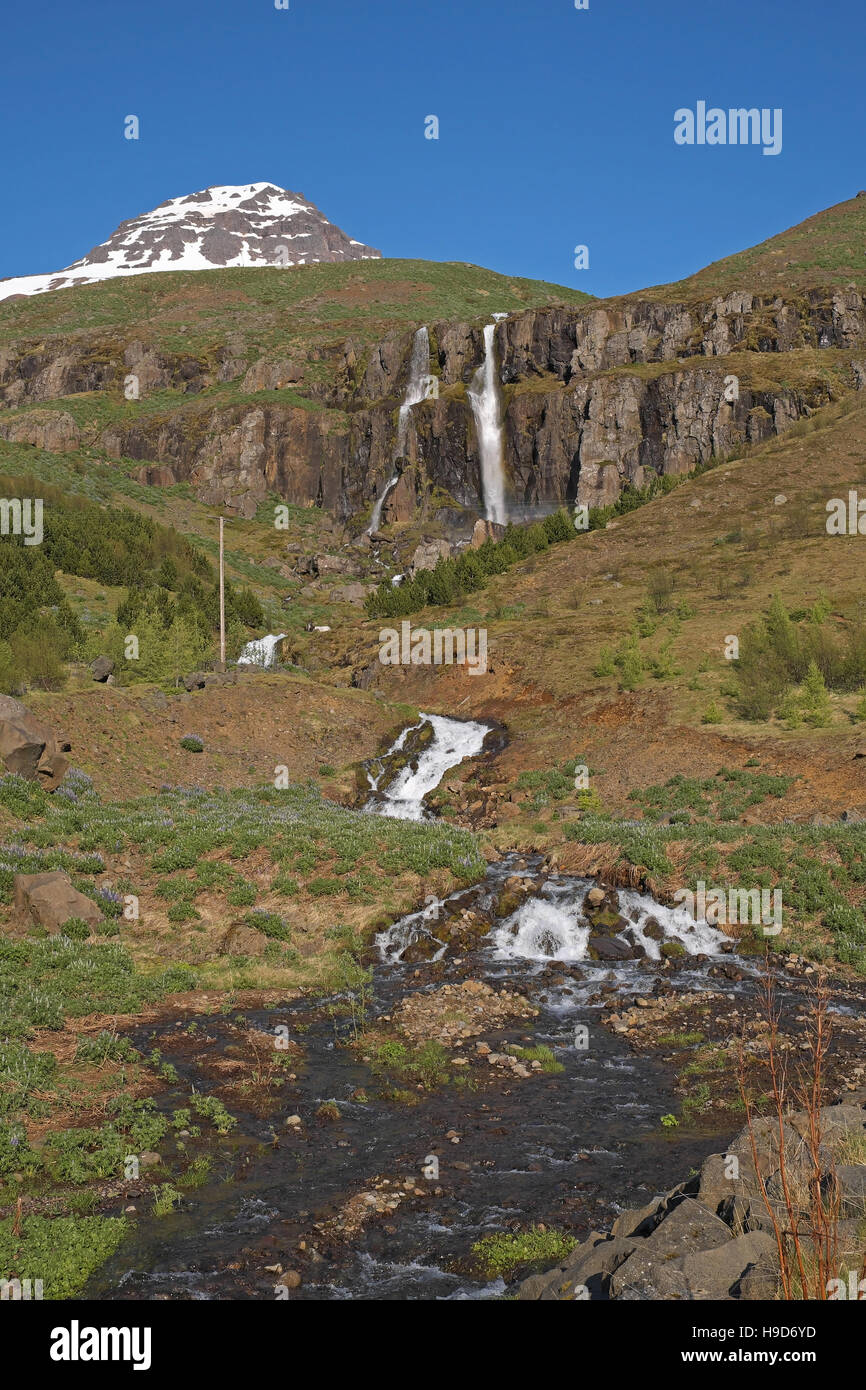 Budarafoss, stream and wild lupins (Lupinus nootkatensis) above Seydisfjordur, Iceland. - Stock Image