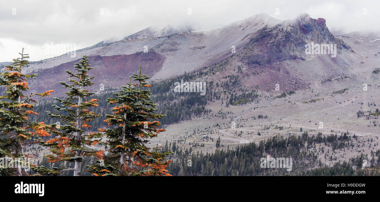 Mount Shasta and pine trees from Grey Butte Trail, Siskiyou County, California, USA - Stock Image