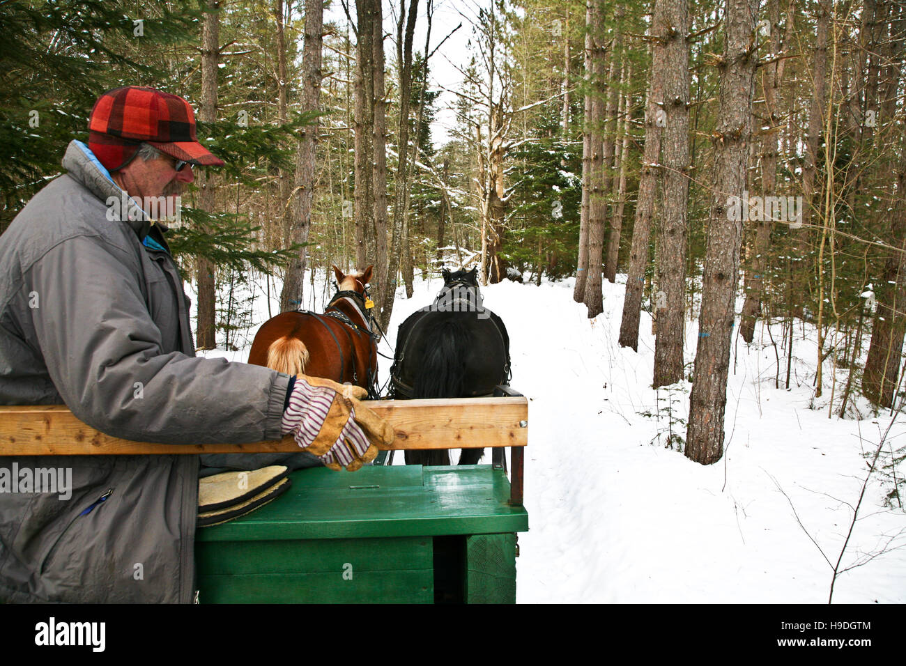 Vintage  Christmas horse drawn sleigh ride through forest, Montgomery, Vermont, USA, rural America, US, United States, - Stock Image