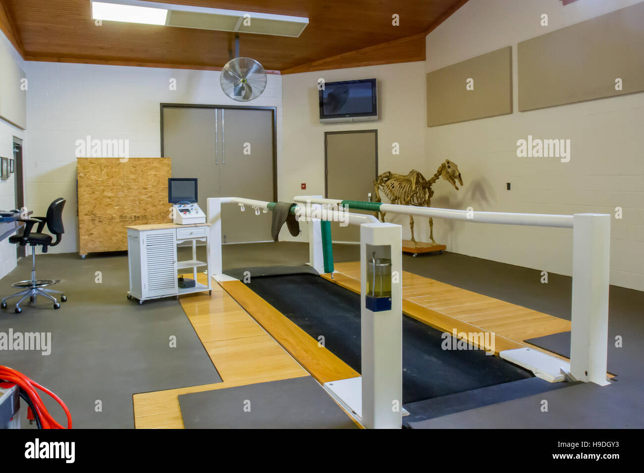 Equine treadmill, monitoring equipment and skeleton of  horse in veterinary hospital. - Stock Image