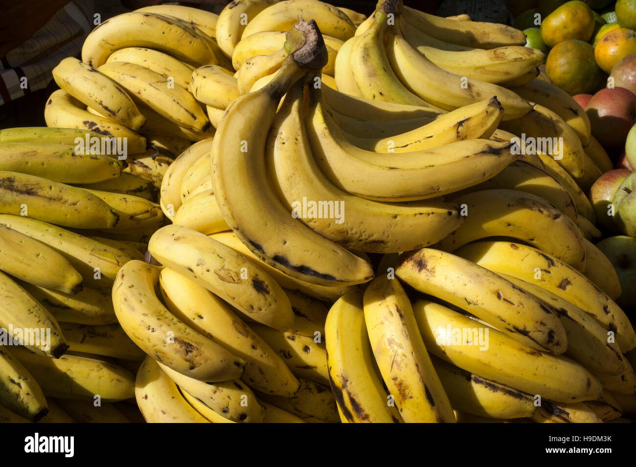 A banana is a fruit or berry. Little known facts about bananas 38