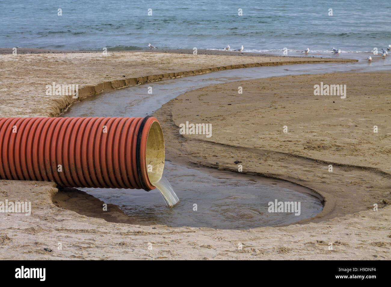 environmental pollution on the beach. Waste pipe or drainage polluting environment. Birds drink waste water - Stock Image