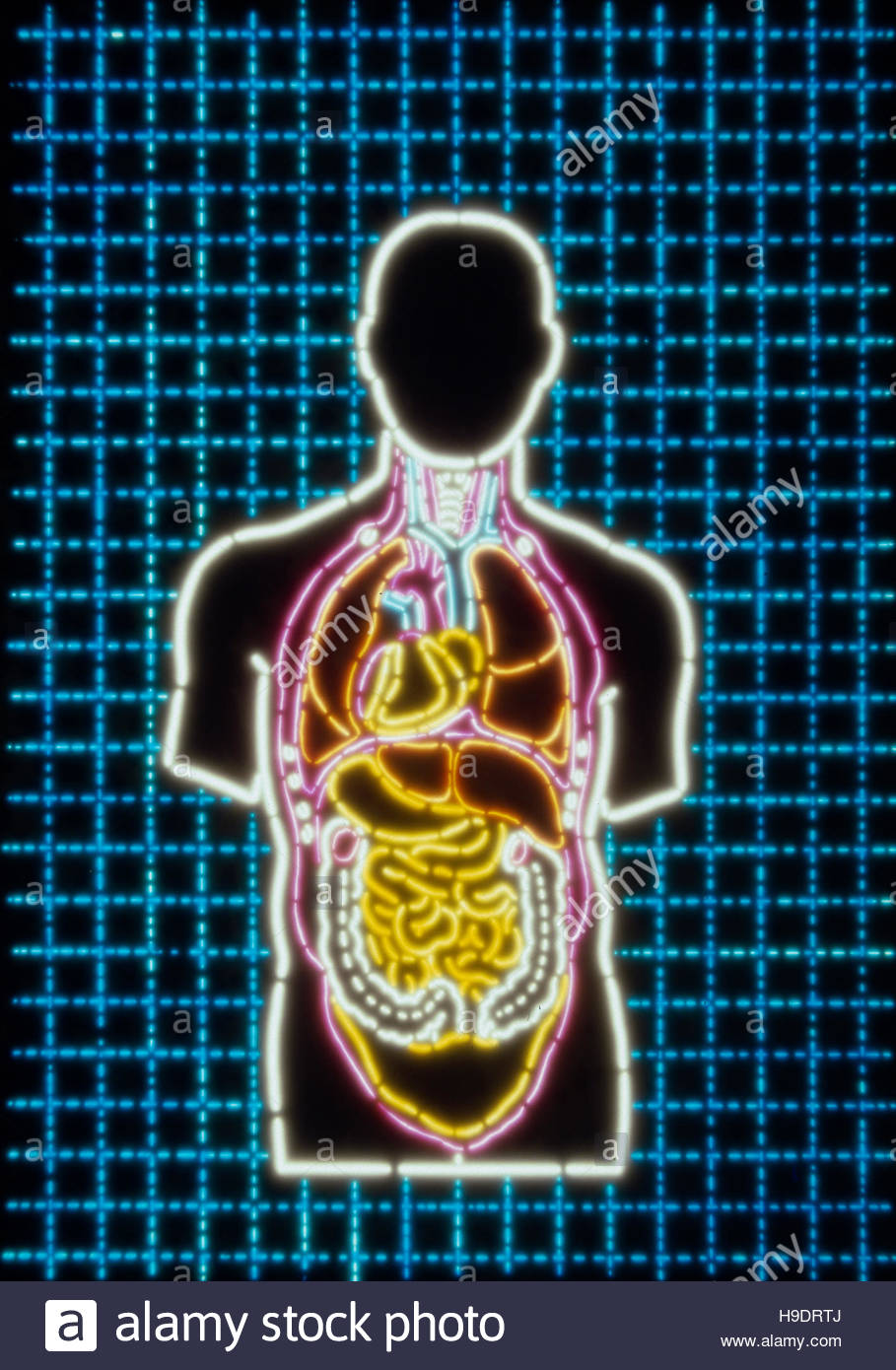 Photo-illustration of a Human Body with internal Organs - Stock Image