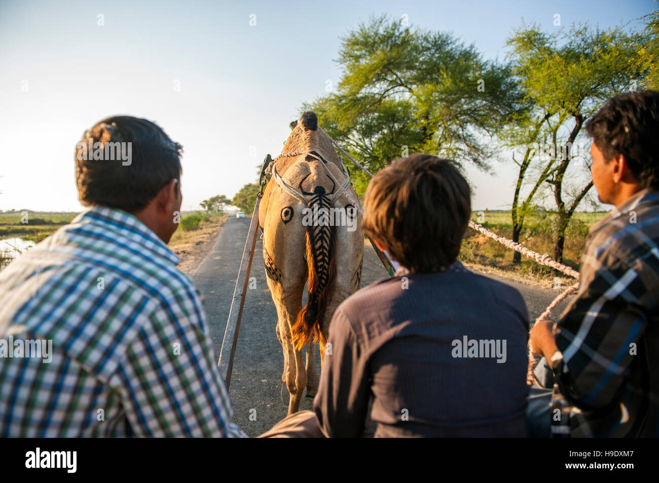 On a camel drawn cart near Dasada, a small town on the edge of the Little Raan of Kutch. - Stock Image