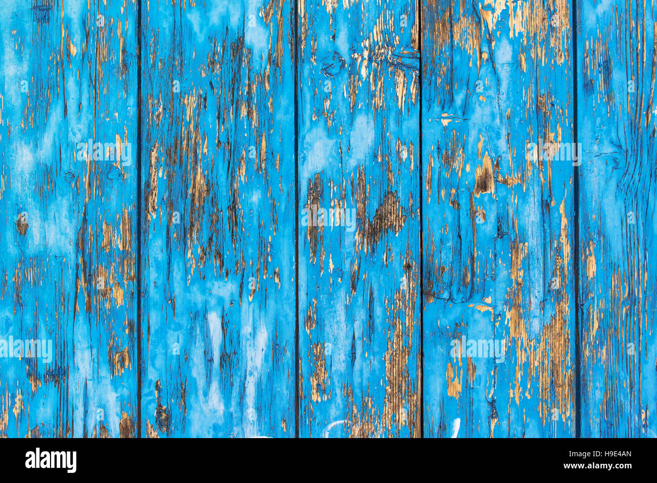 Background of rustic planks with blue paint peel off the textured surface - Stock Image