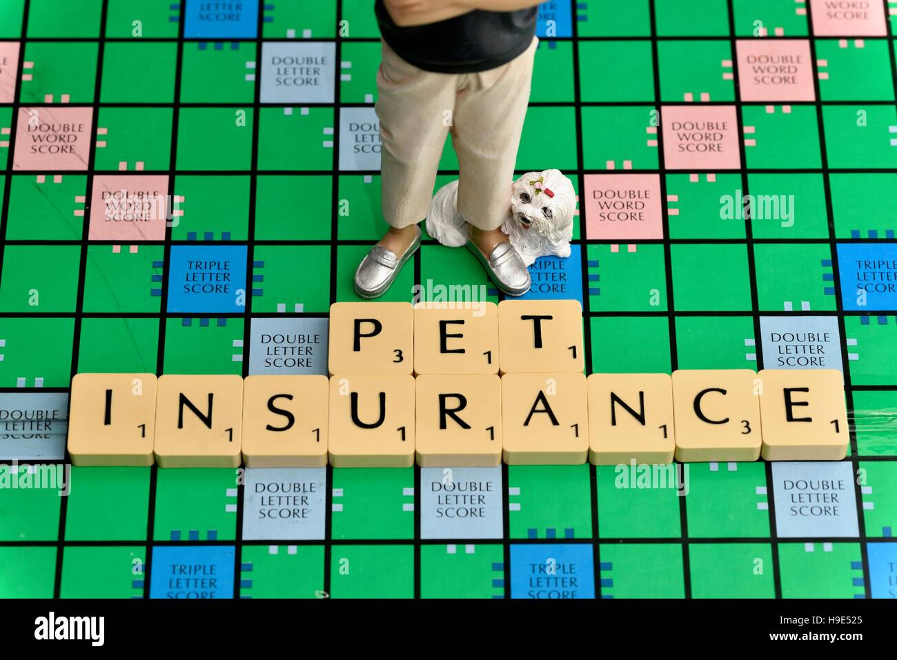 Pet insurance concept. - Stock Image
