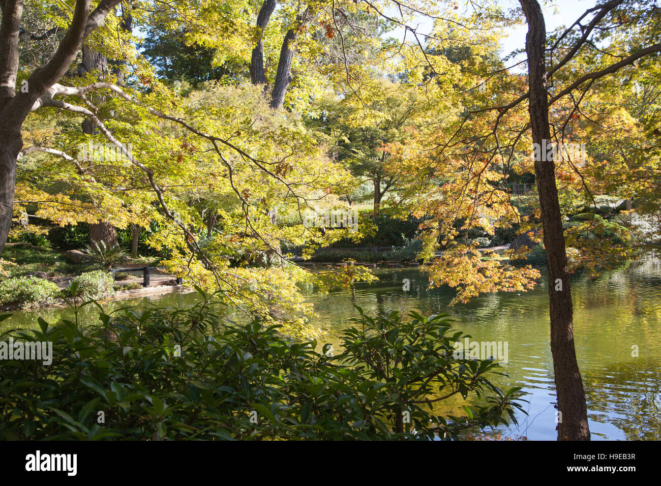 Japanese Garden, Dallas, TX   Stock Image