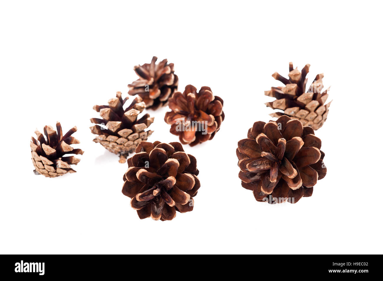 Pine cones group isolated on white - Stock Image