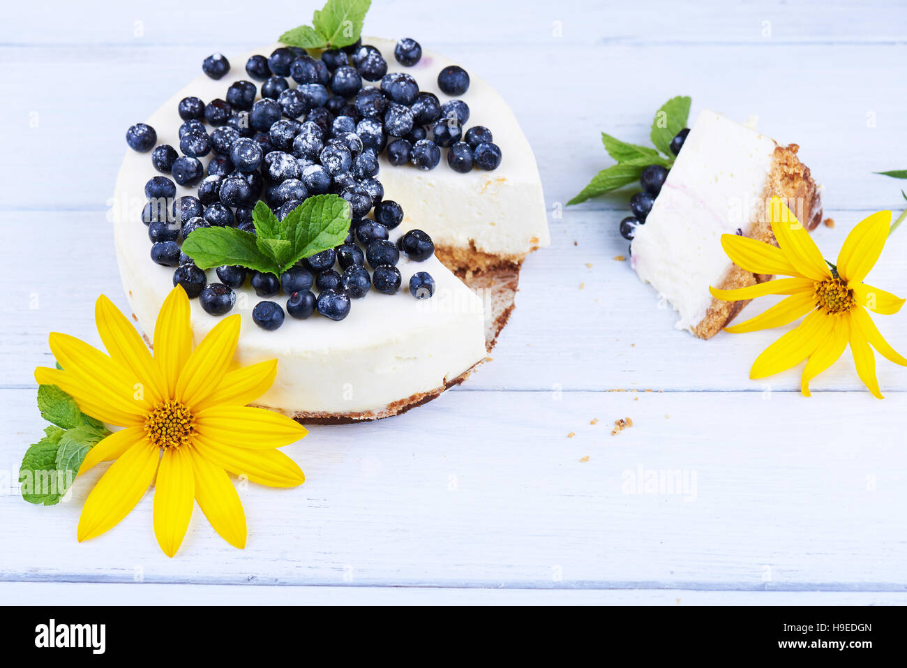 Sweet creamy blueberry cheesecake with fresh blueberries, mint leaves, and yellow flower with a cut piece on a white - Stock Image