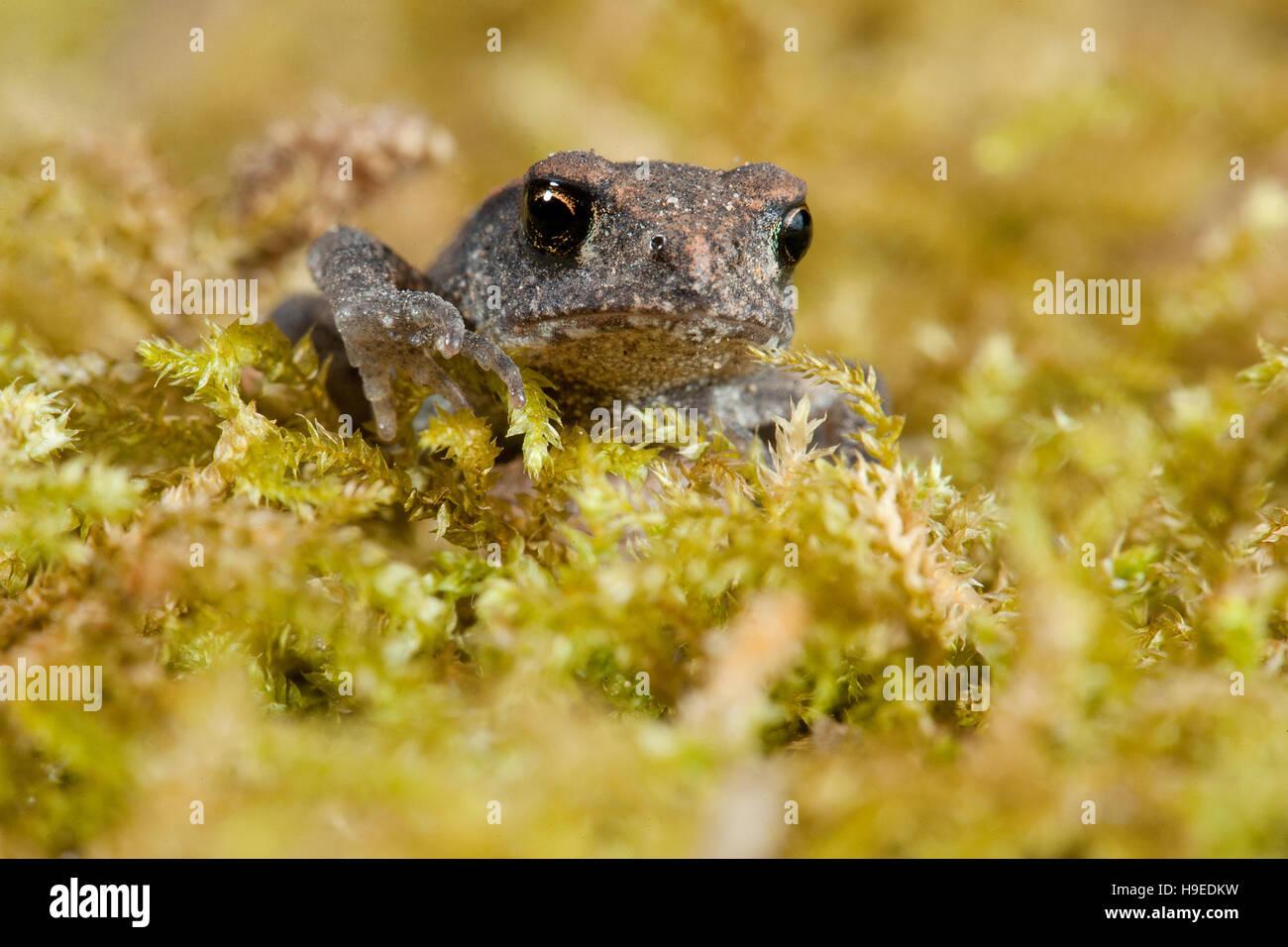 Frog - Stock Image