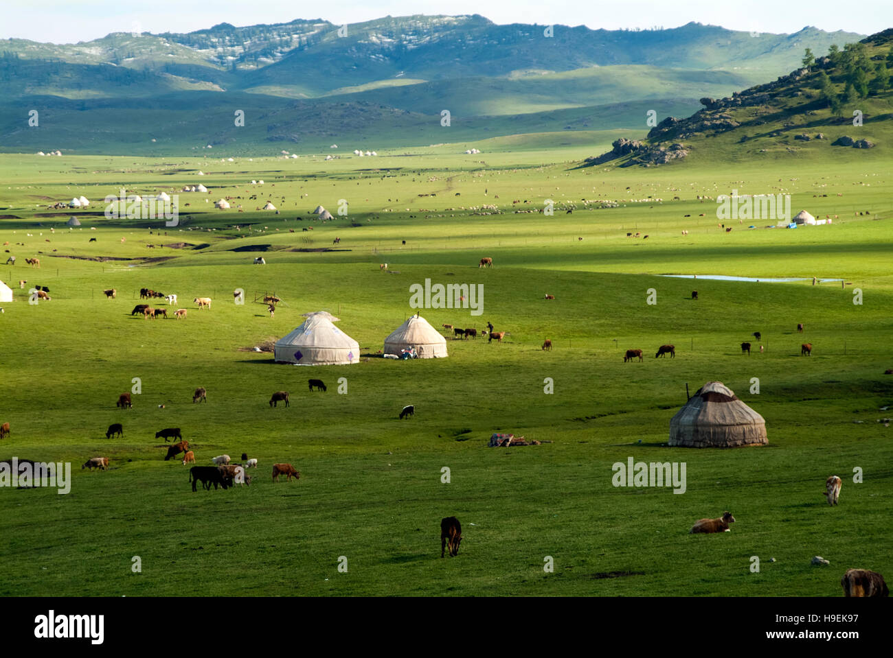 Nomad yurts, sheep and camels in the Kanas Valley at the Altai Mountains in China's Xinjiang Province bordering - Stock Image