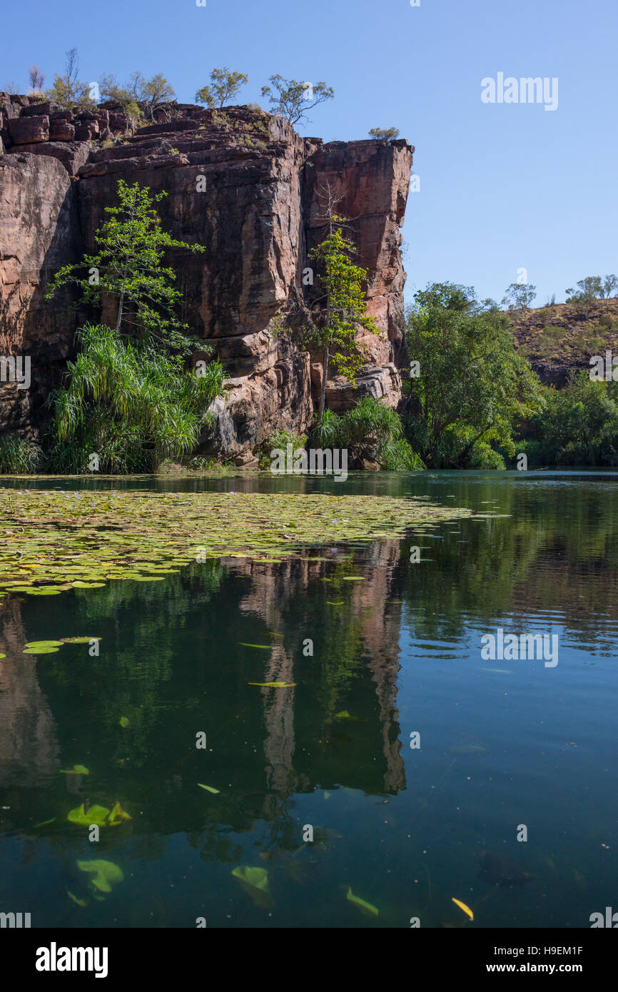Lawn Hill Gorge, Queensland, Australia with waterlilies and reflections - Stock Image