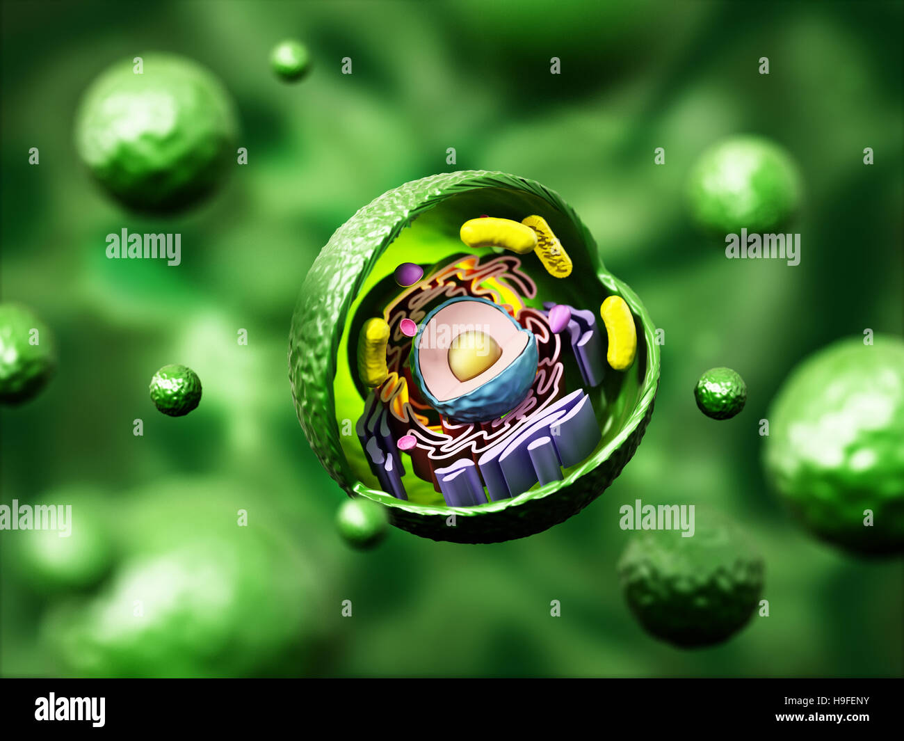 Cell Biology Stock Photos Images Alamy 3d Plant Diagram From Textbook Image Gallery Animal Anatomy On Green Background Illustration