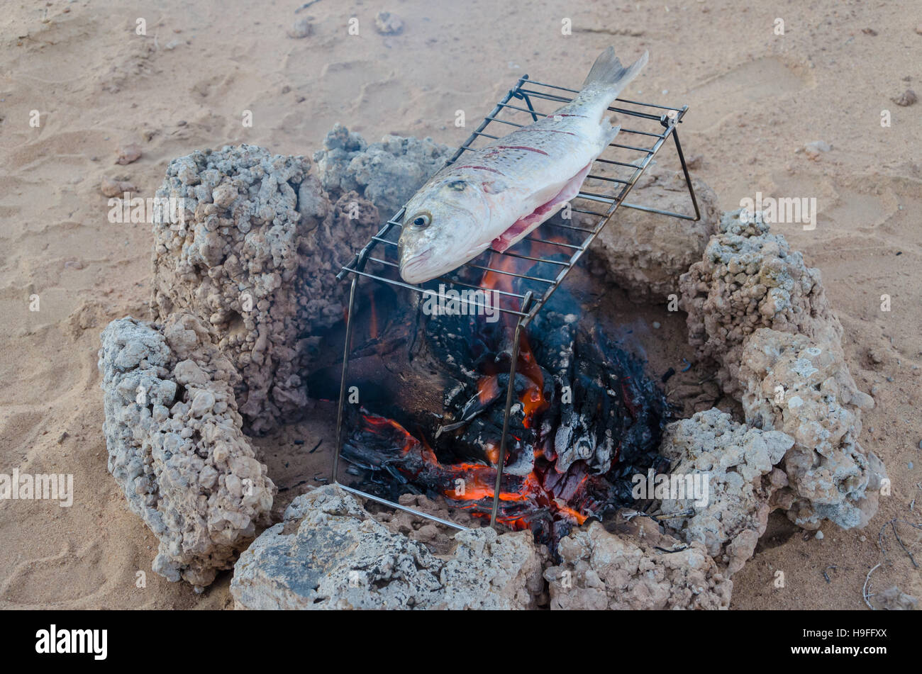 Freshly caught fish being grilled over open campfire out in the desert - Stock Image