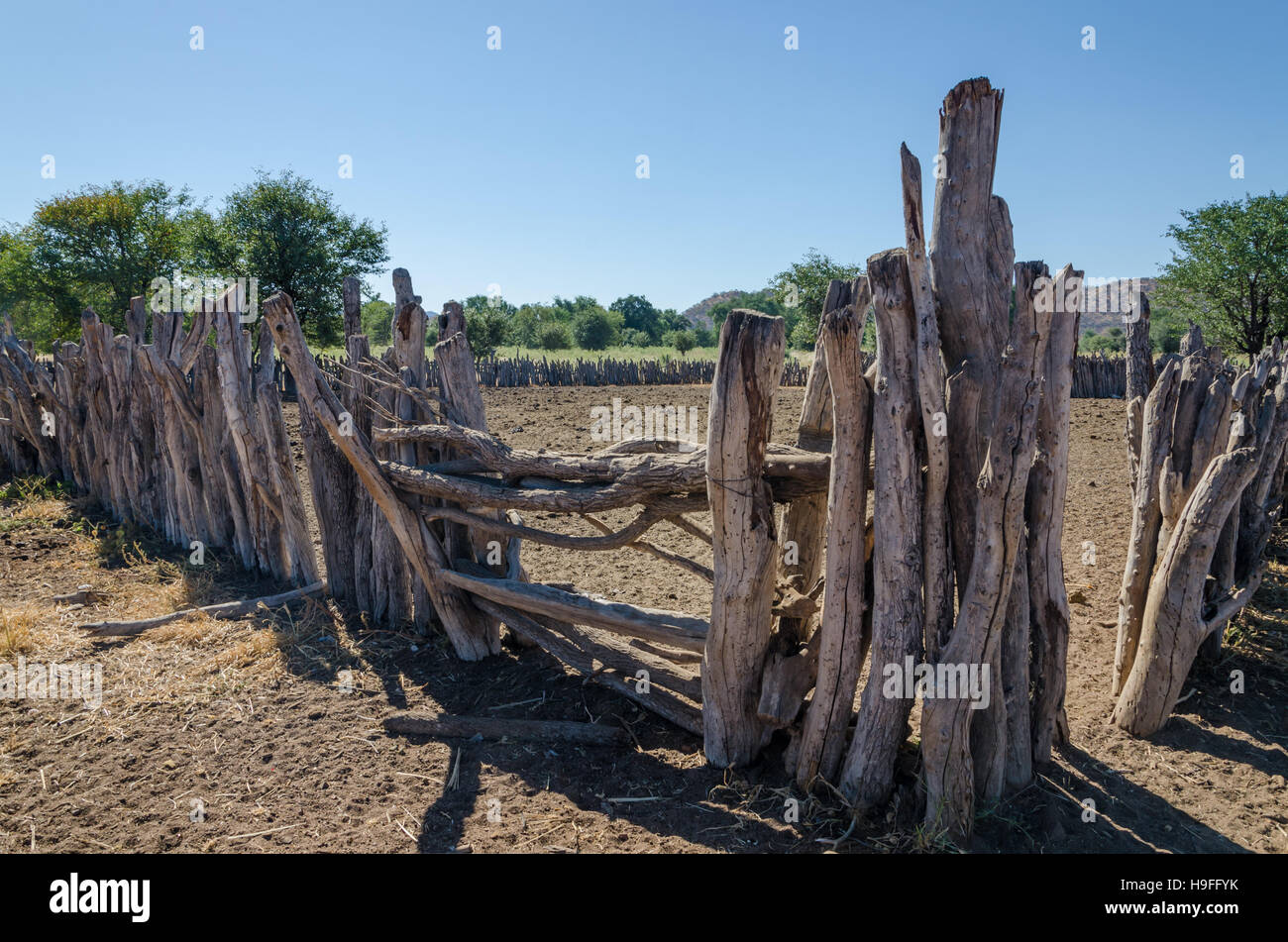 Traditional wooden kraal or enclosure for cattles of Himba tribe people Stock Photo
