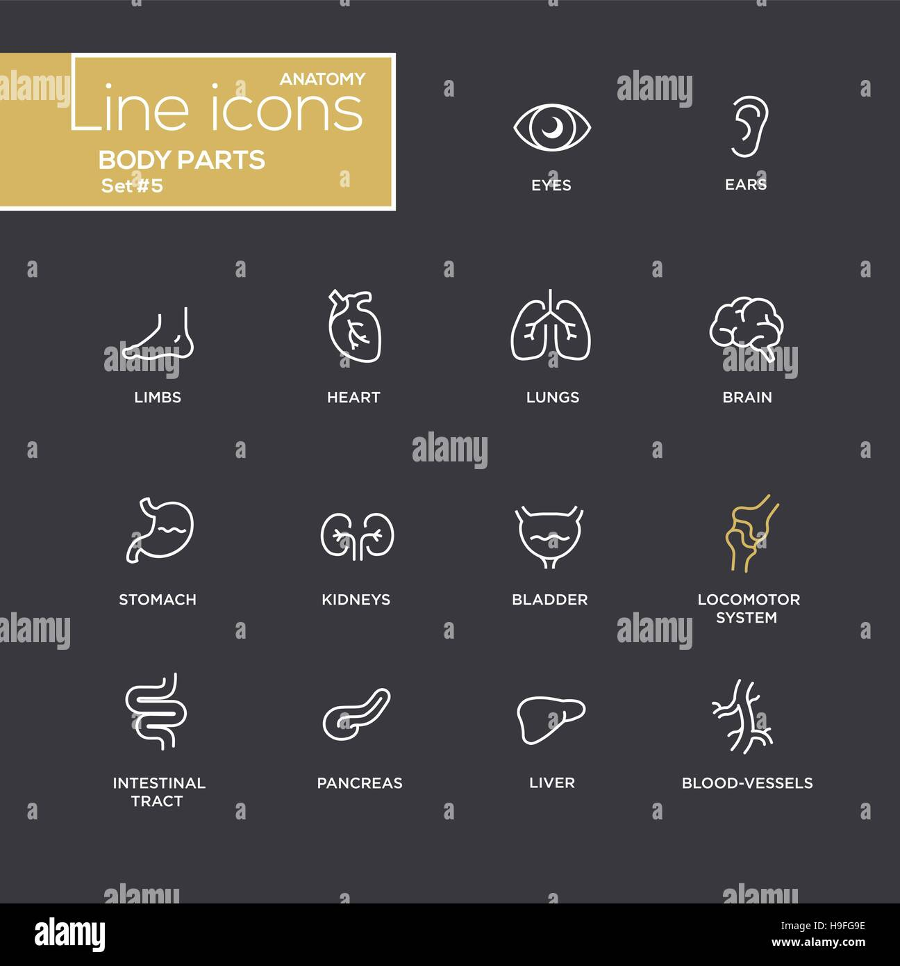 Body parts - modern vector plain simple thin line design icons and pictograms set - black background. Eyes, ear, - Stock Image