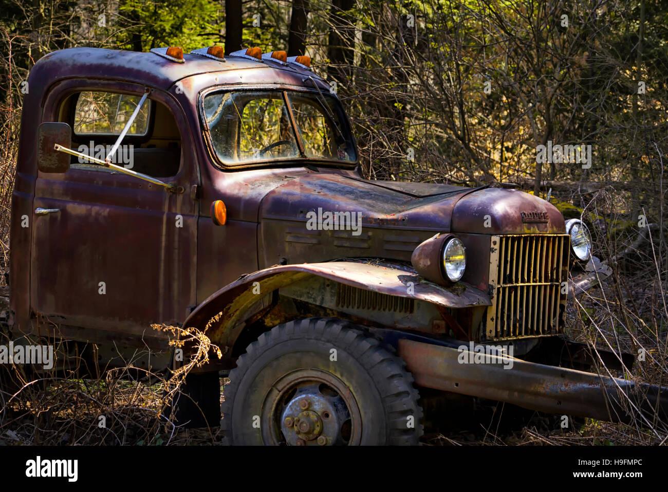 1952 Dodge old pickup truck Stock Photo: 126350068 - Alamy