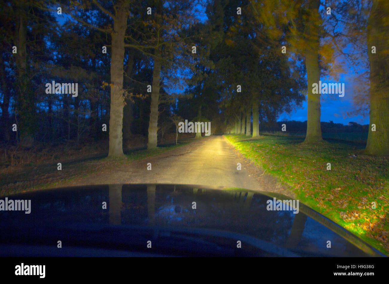 Oak trees lit by car lights abstract - Stock Image