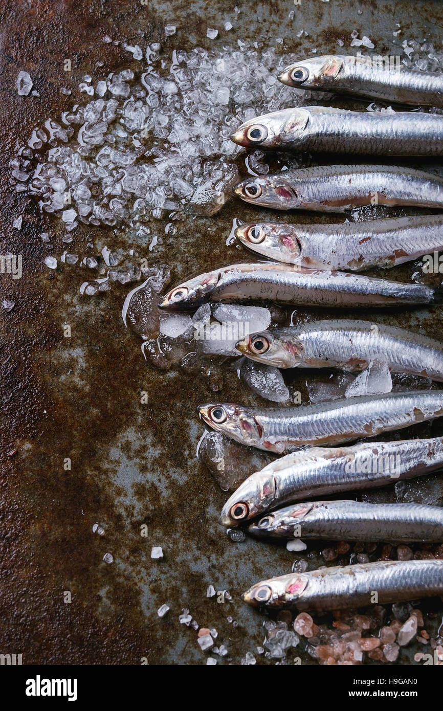 Raw fresh anchovies fishes - Stock Image