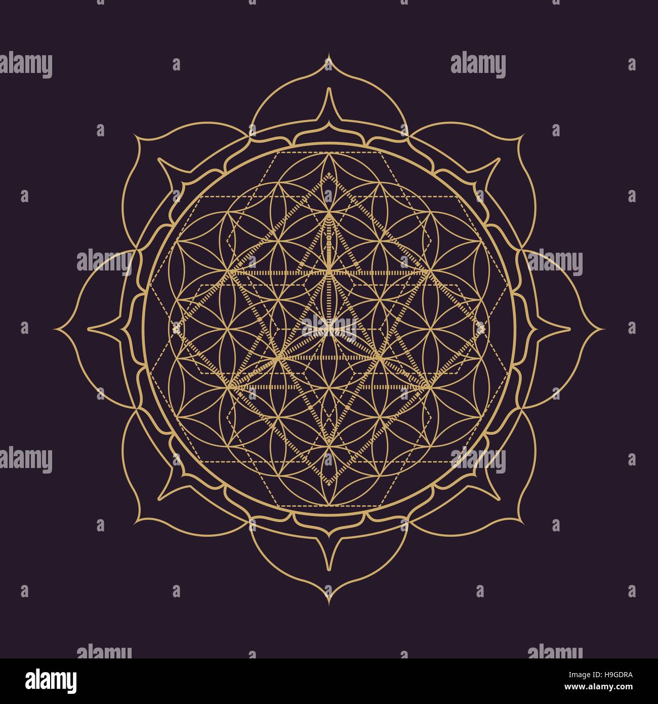 vector gold monochrome design abstract mandala sacred geometry illustration Flower of life Merkaba lotus isolated - Stock Image