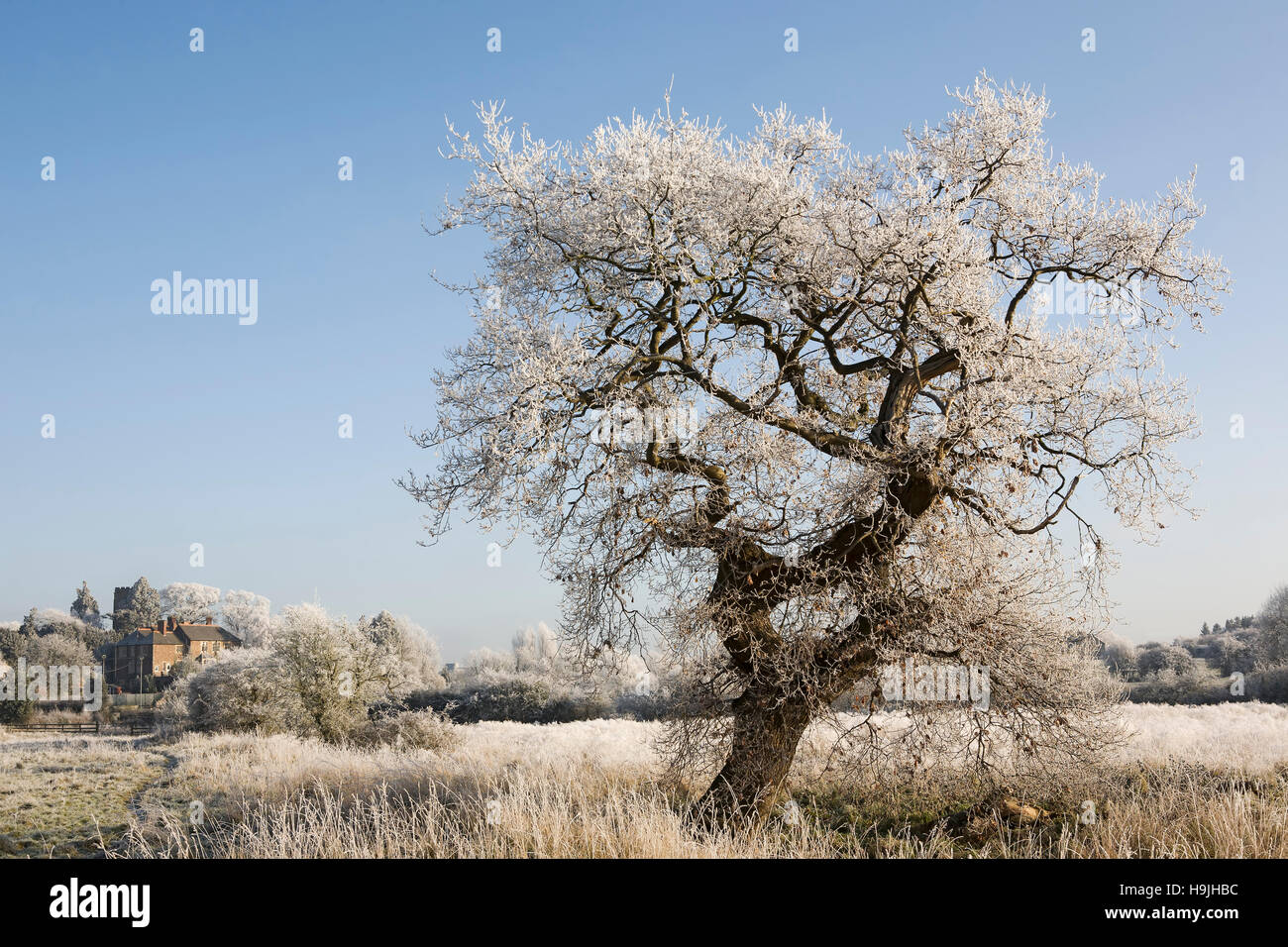 Frost covered tree and Croft church in the background - Stock Image